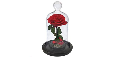 <p>10% de desconto na rosa encantada</p>