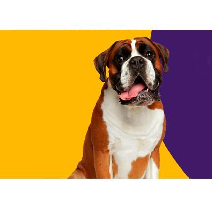 Imagem Royal Pets